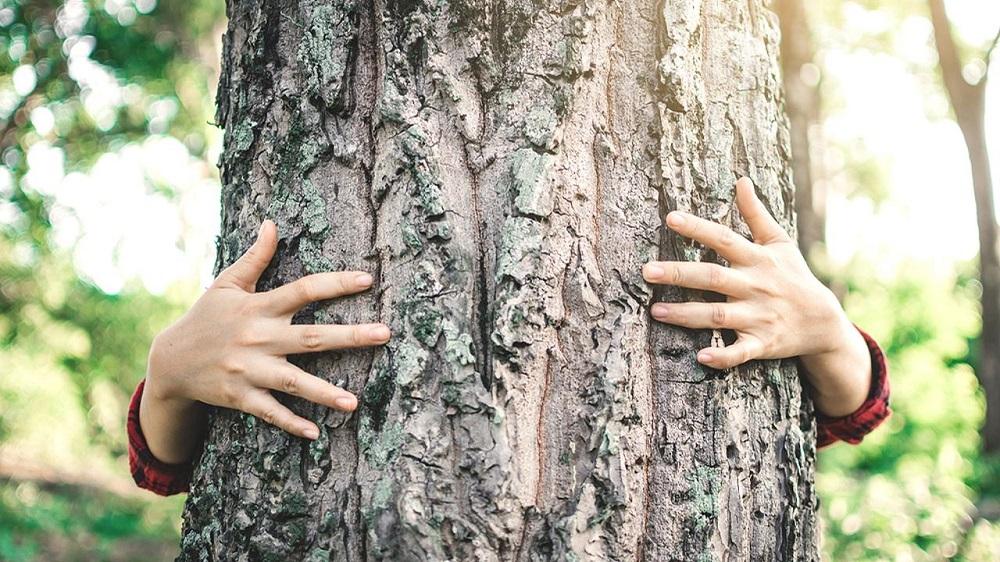 руки обнимают дерево