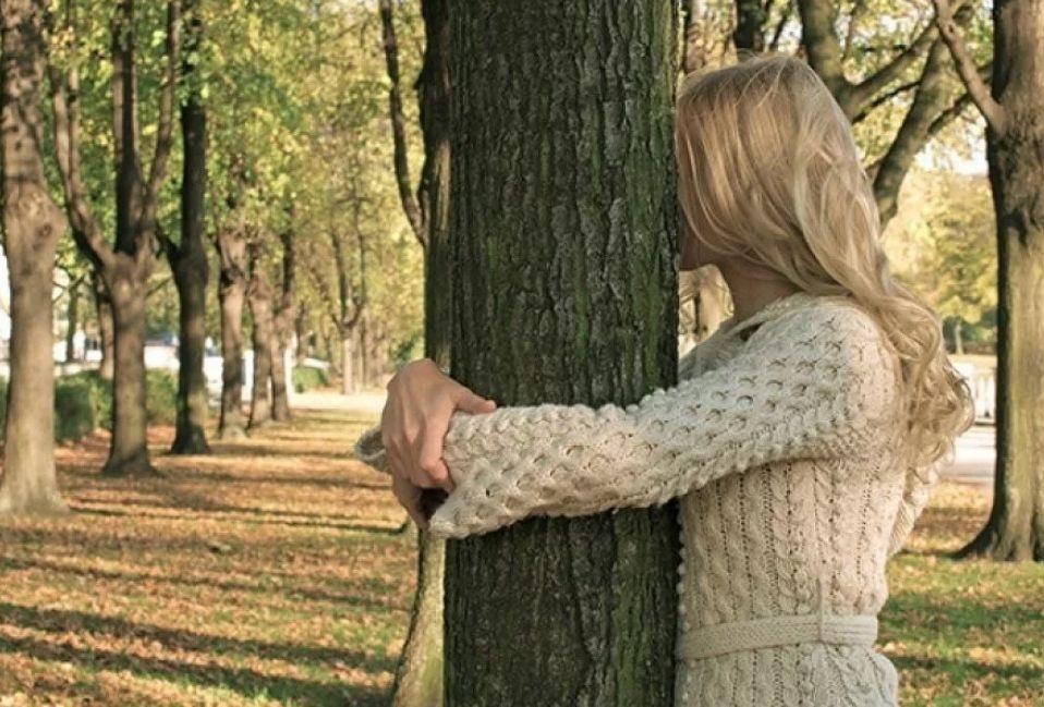 девушка обнимает дерево-донора