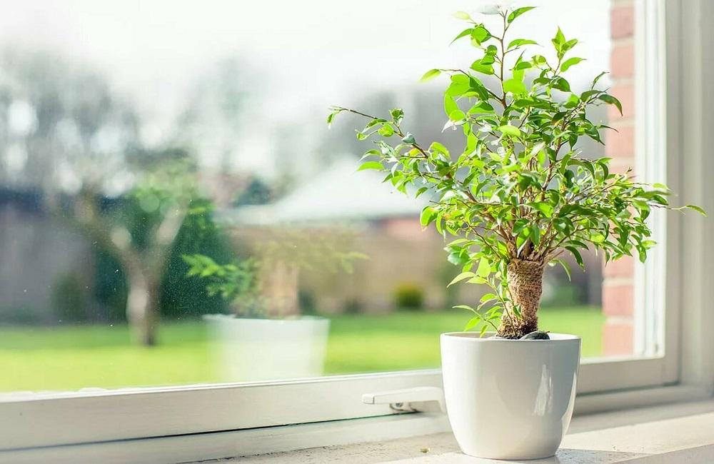 комнатное растение весной