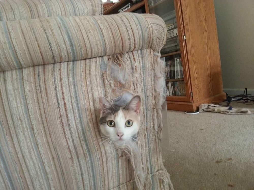 кошка разодрала кресло