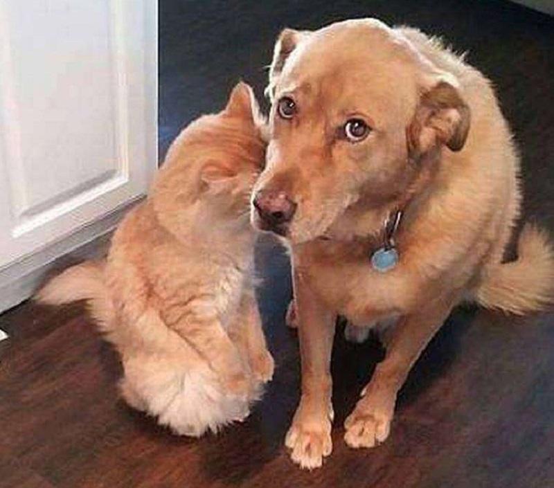 собака и кошка виноваты