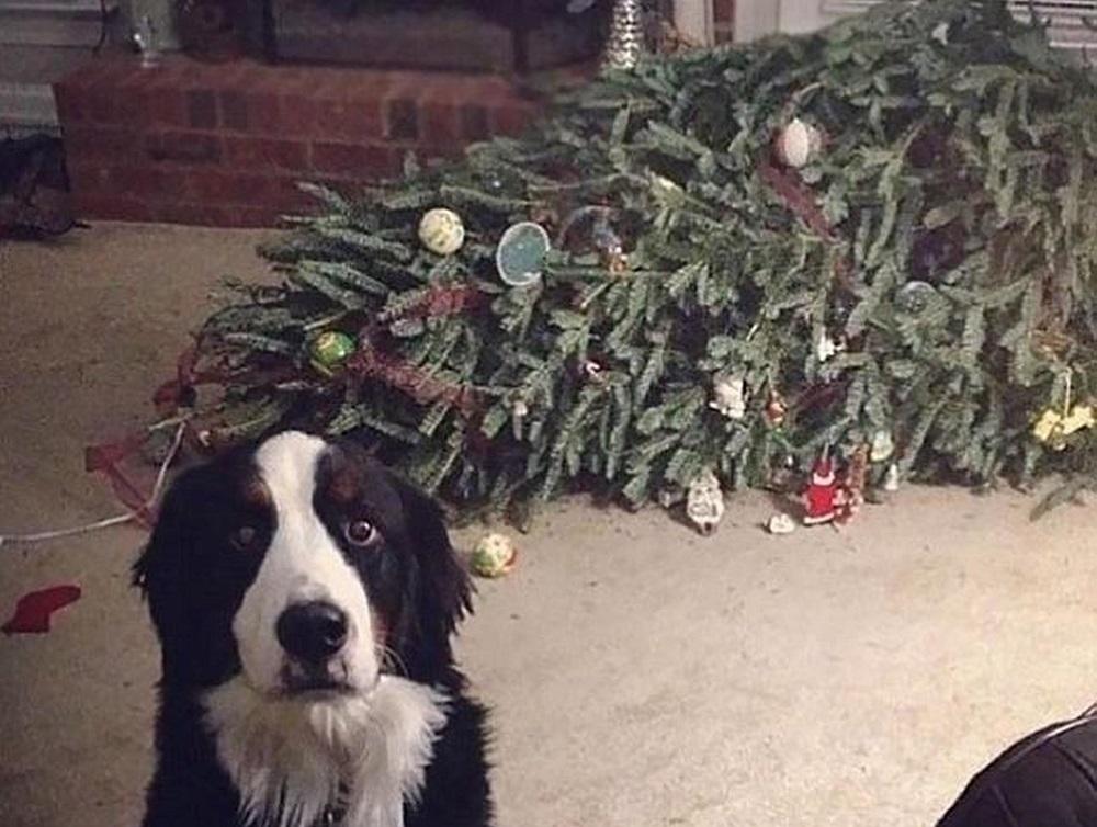 собака уронила елку