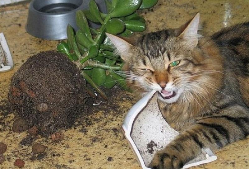 кот разбил горшок с денежным деревом