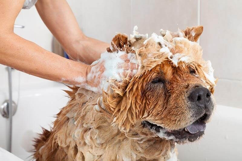 помыть собаку кетчупом