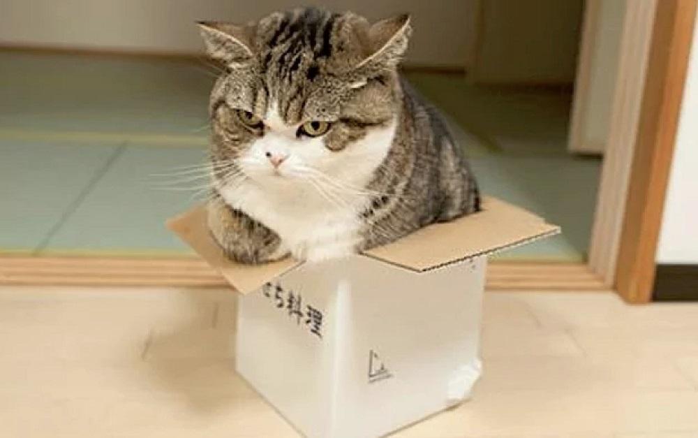 где кот отдыхает