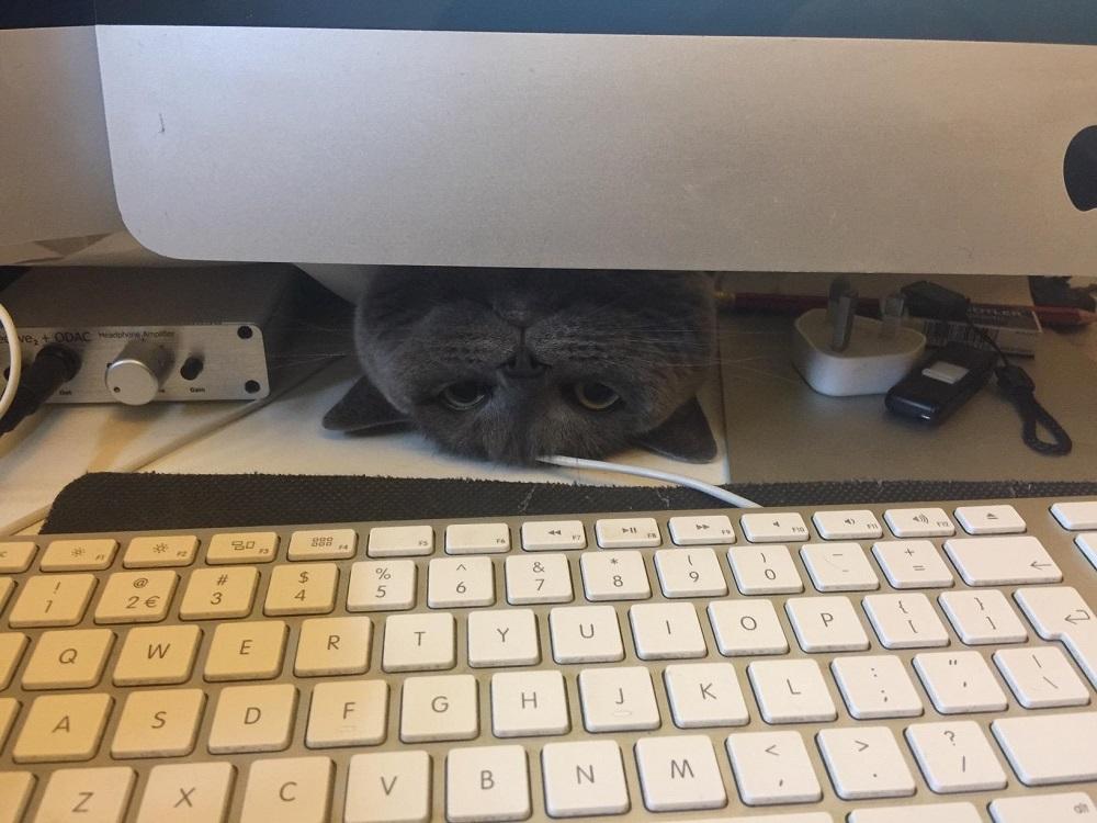 где кот за компьютером