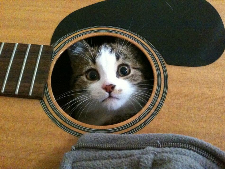 кот спрятался в гитаре
