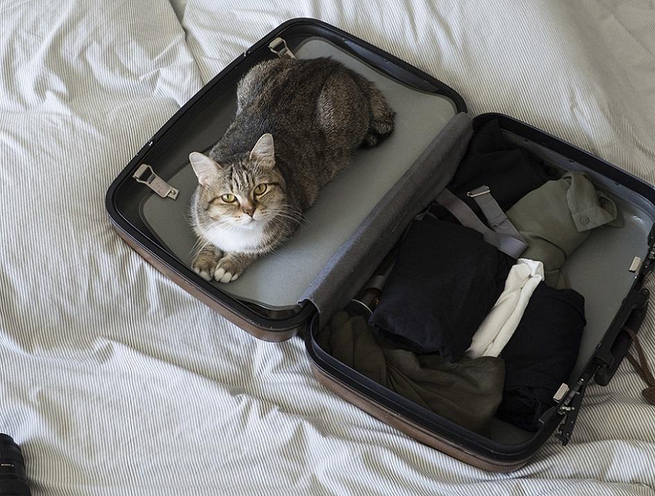 где кот в чемодане