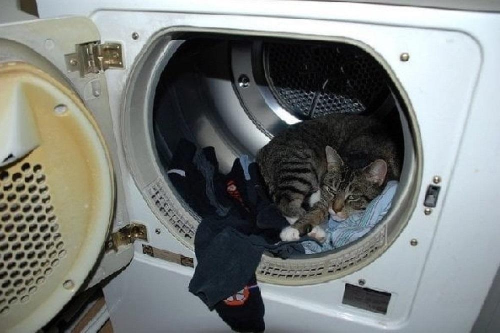 где делся кот стиральная машинка