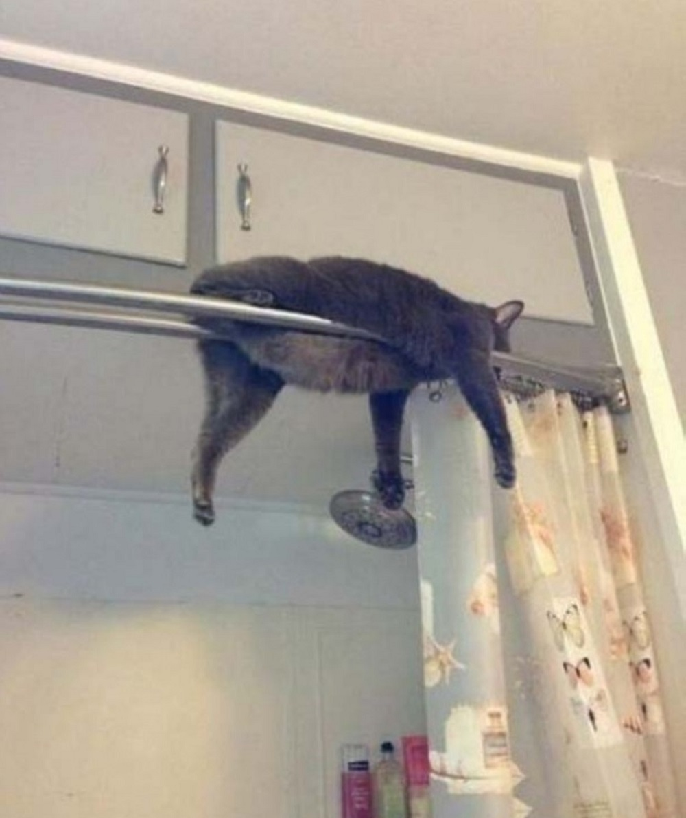 кот спрятался в душе