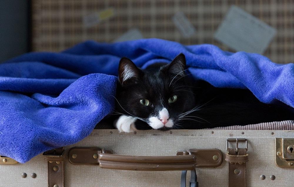 кошка на чемодане