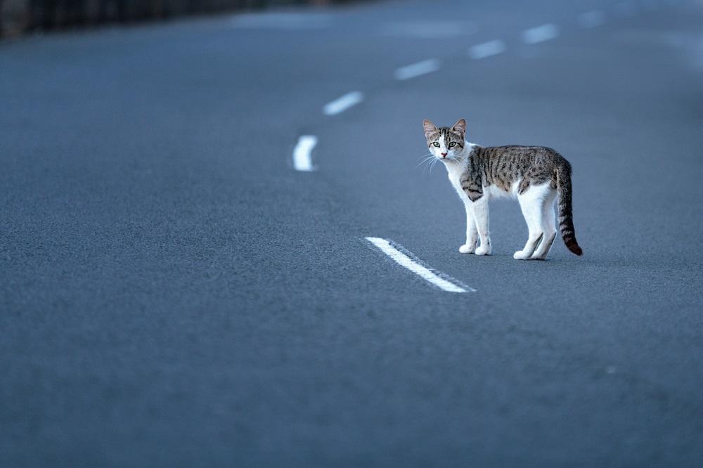 кошка перебегает дорогу