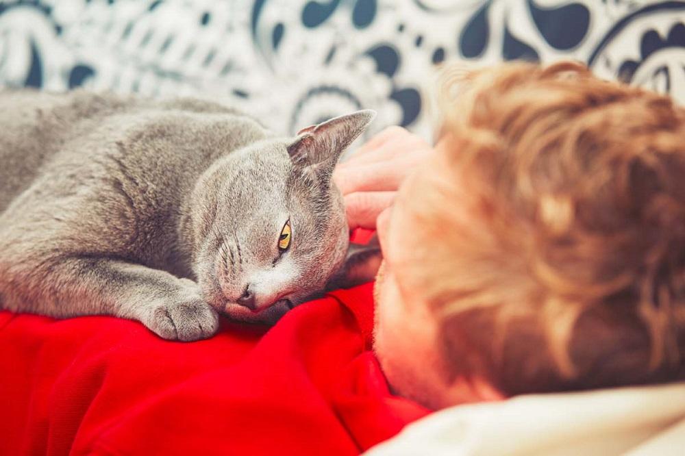 кошка лежит на больном месте