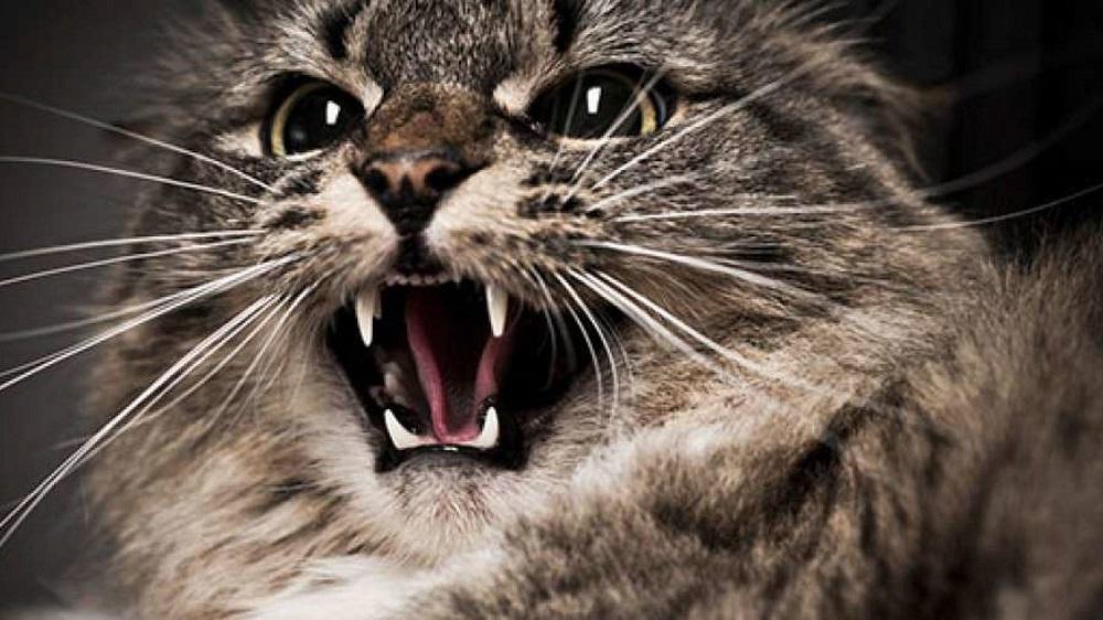 кошка чувствует опасность