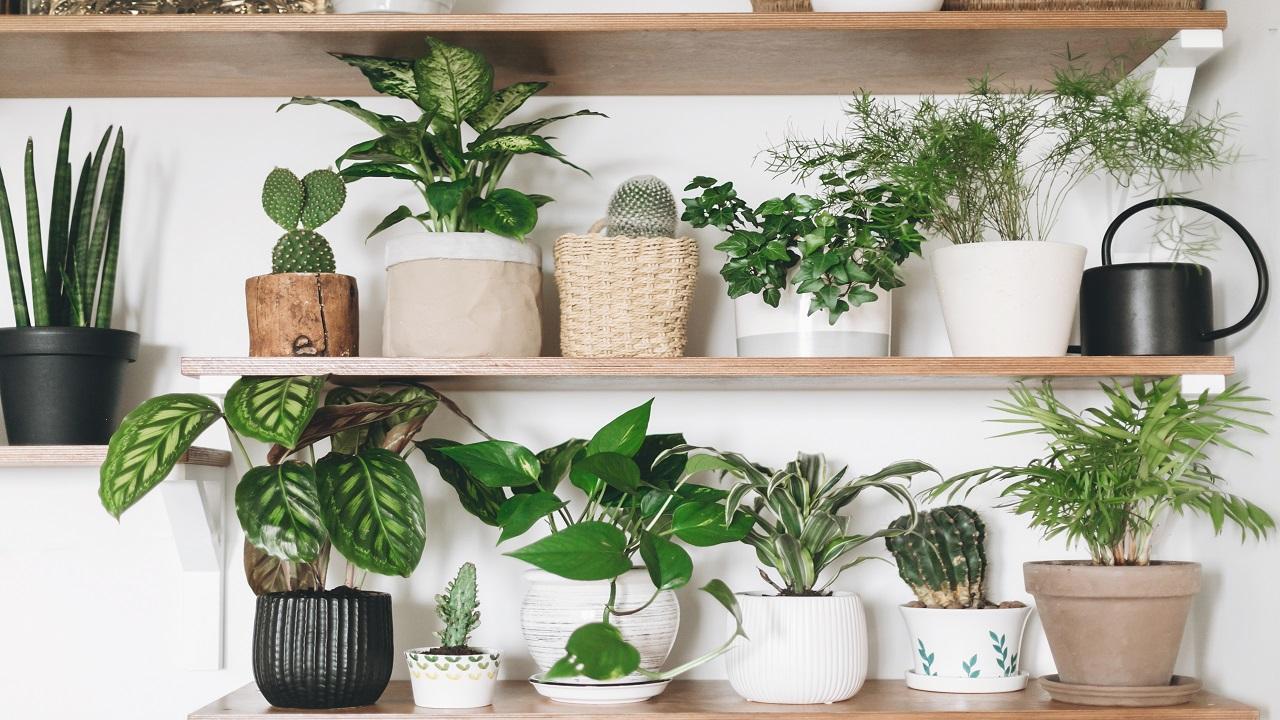деревянные полки с зелеными растениями