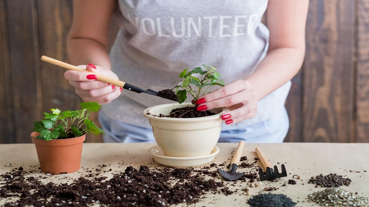 женщина разрыхляет землю в вазоне