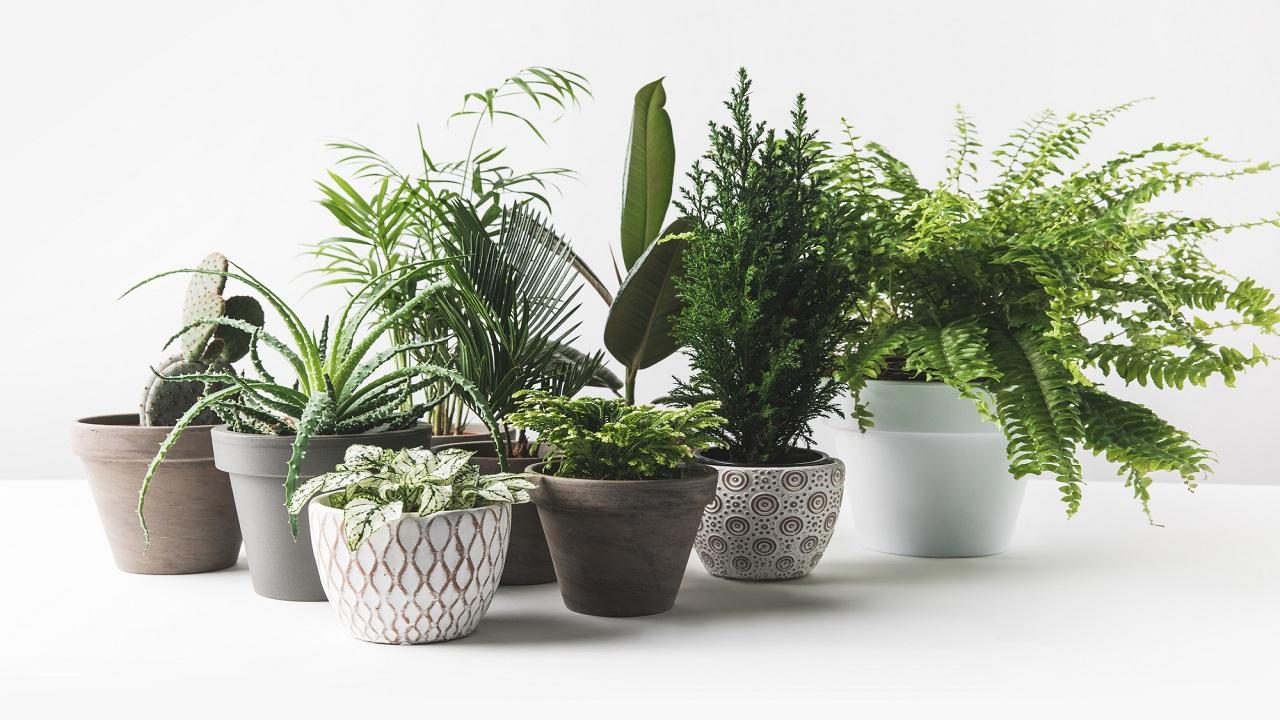 много домашних растений на белом фоне