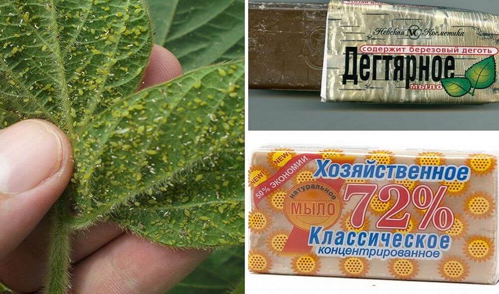 мыльный раствор для растений