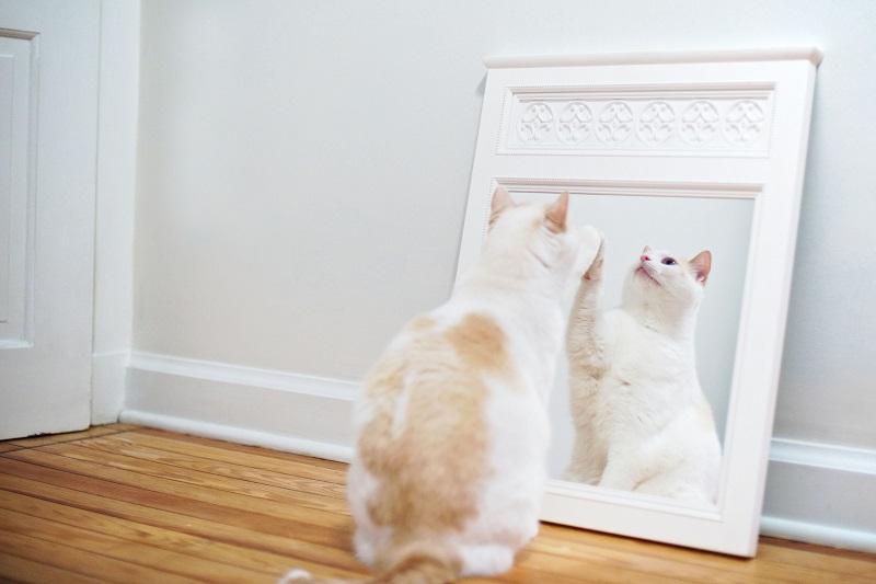 отпечатки на зеркалах и глянцевых поверхностях