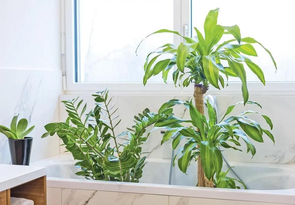 зеленые растения в ванне