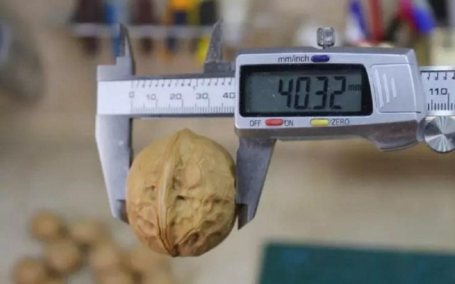 орех измеряют штангенциркулем