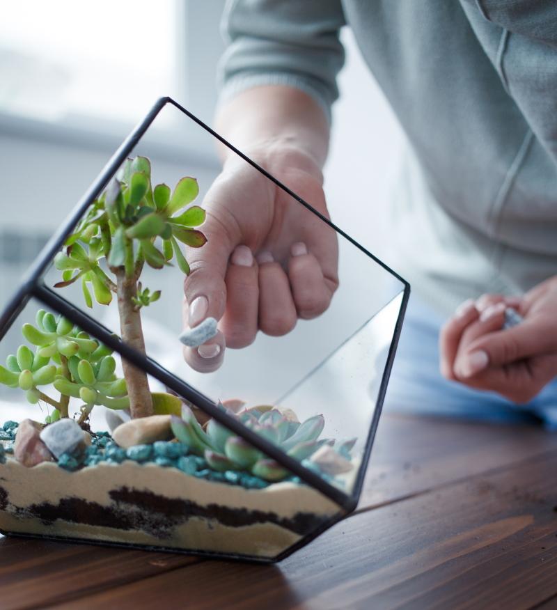 как сделать флорариум самостоятельно