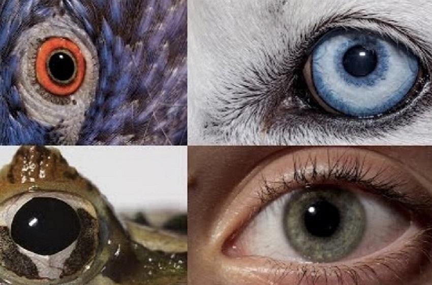Как видят животные твой дом