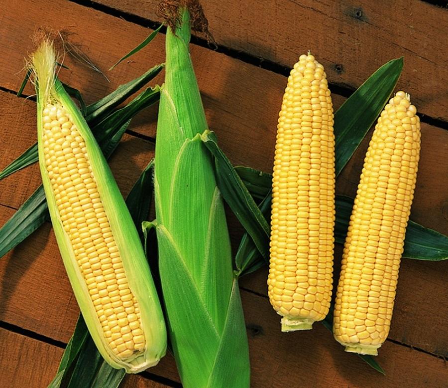 вкусная кукуруза выбрать