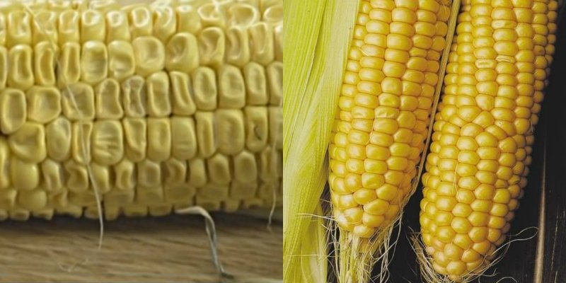 кукуруза сочность зерен