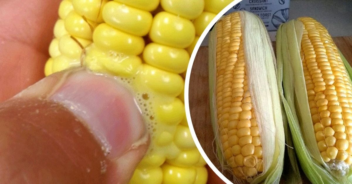 как выбрать вкусную кукурузу