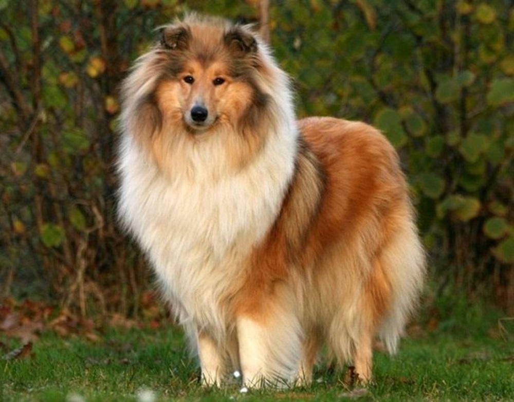 какая собака по гороскопу рак