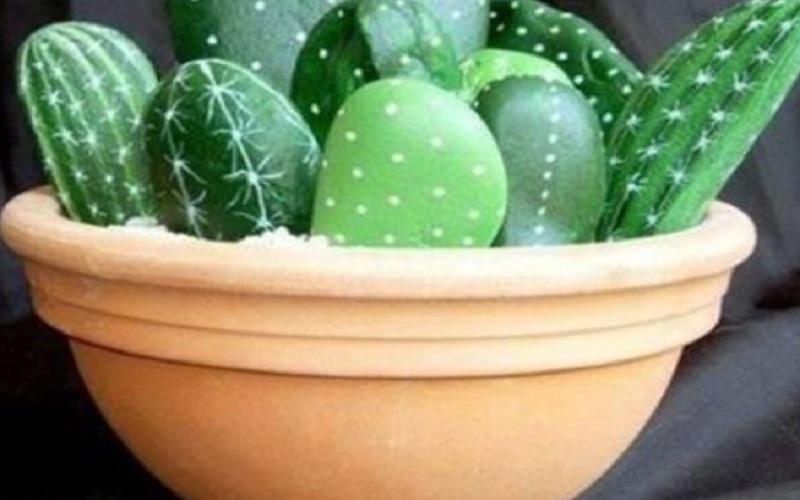 Бессмертные комнатные растения