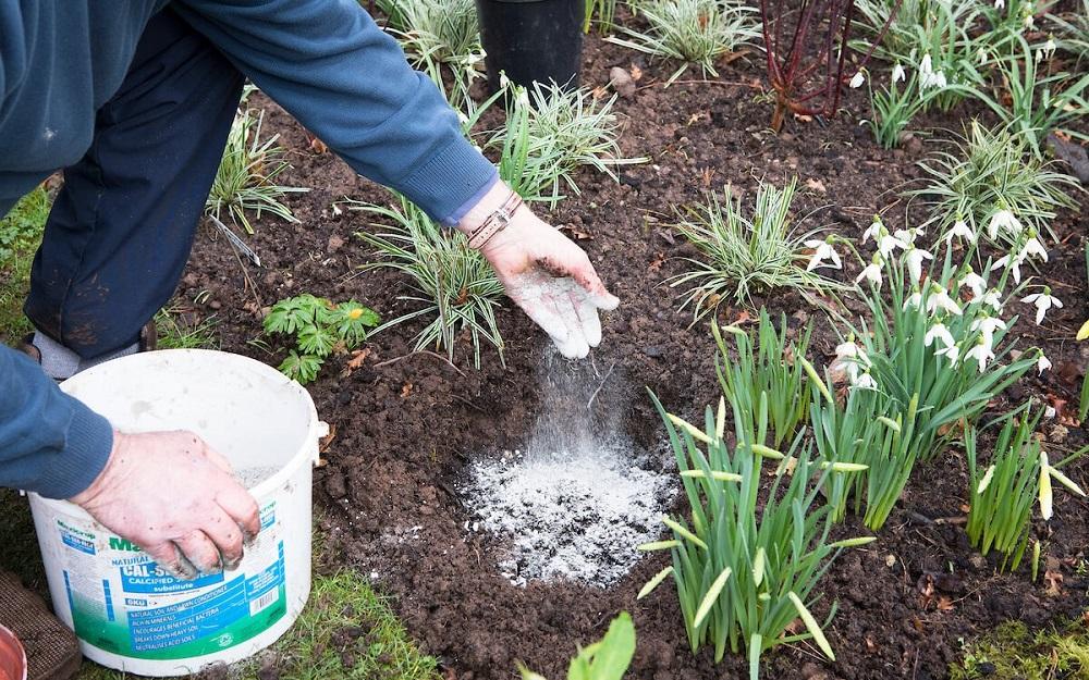 зола для растений