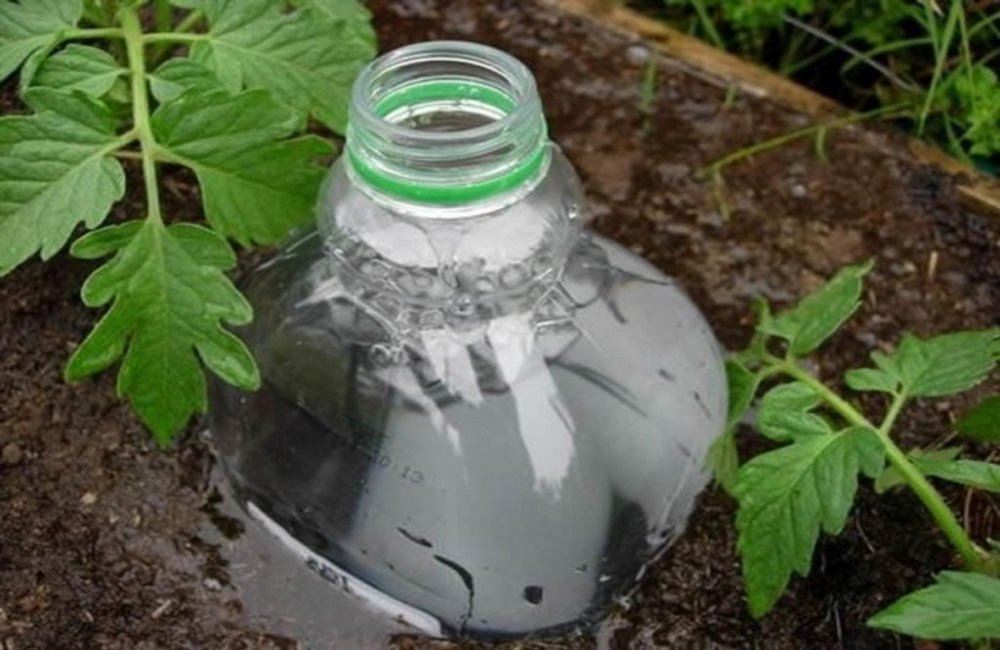полив с помощью бутылки