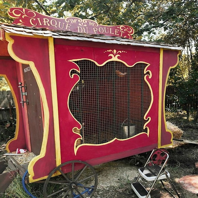 цирковой курятник