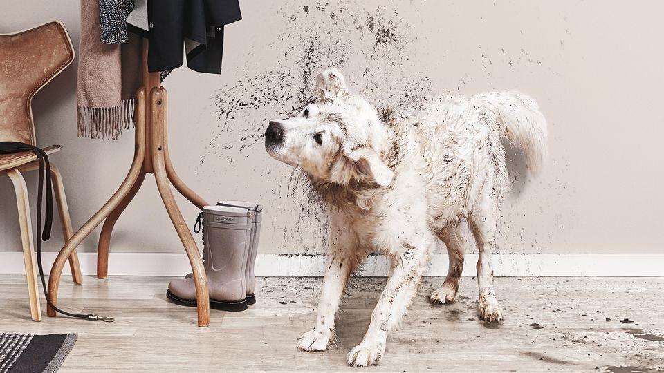 собака отряхивается от грязи
