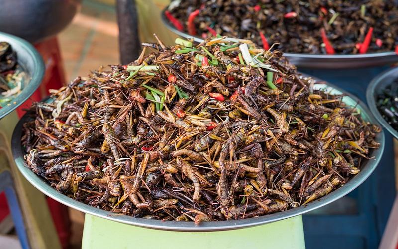 насекомые в пище