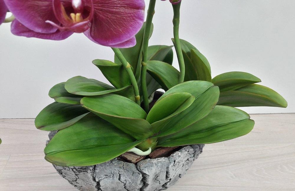 листья орхидеи