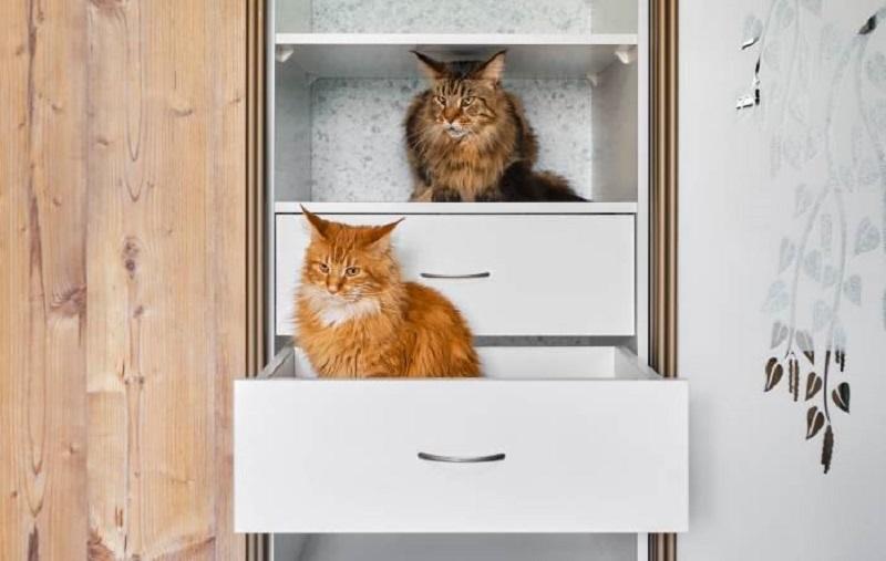мейн-куны в шкафу
