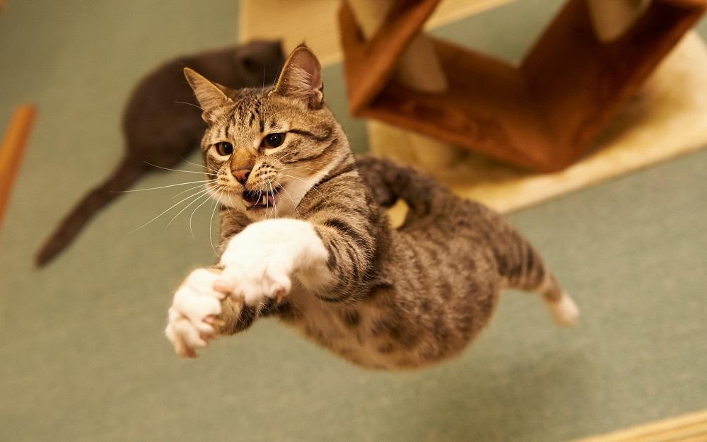 кот активно бегает