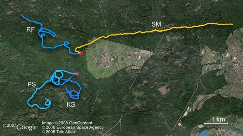 карта исследования Сумана
