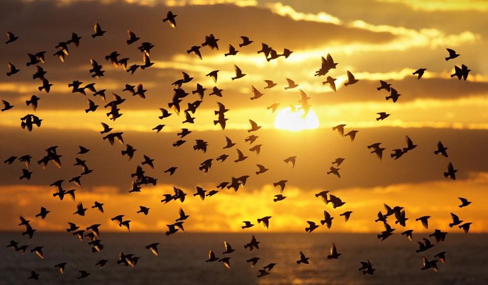птицы летят на юг