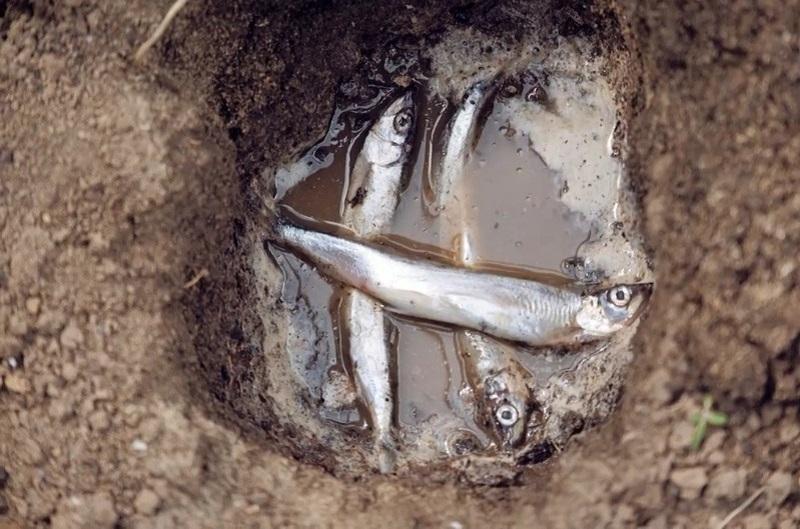 рыба в ямке с водой