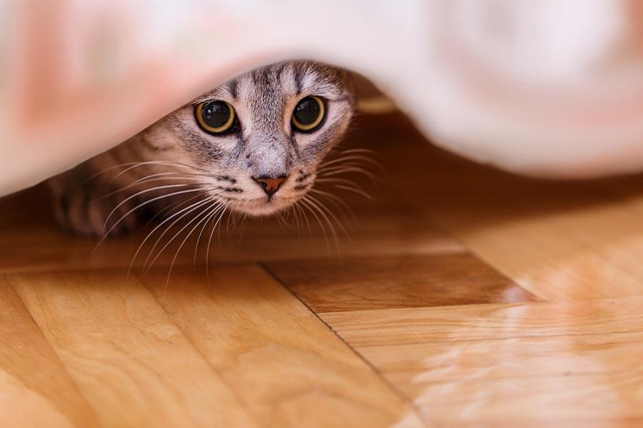 животное прячется