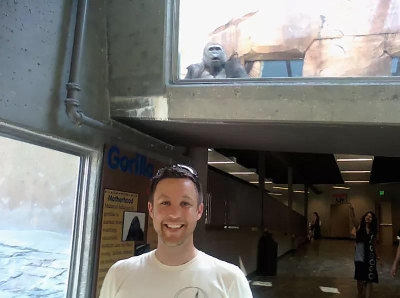 случайные фото горилла в шоке