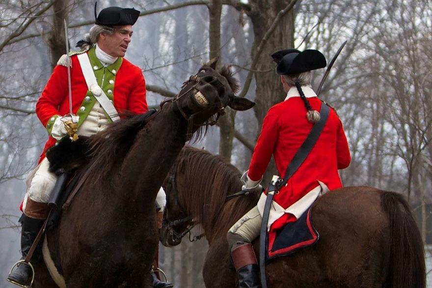 случайные фото лошадь улыбается