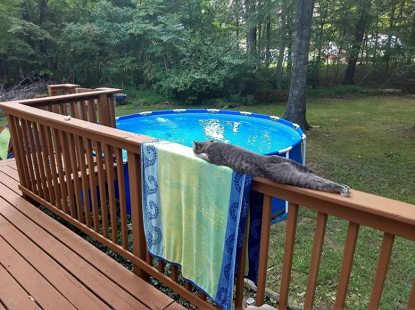 длинный кот у бассейна
