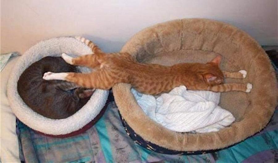 кот спит на двух лежанках