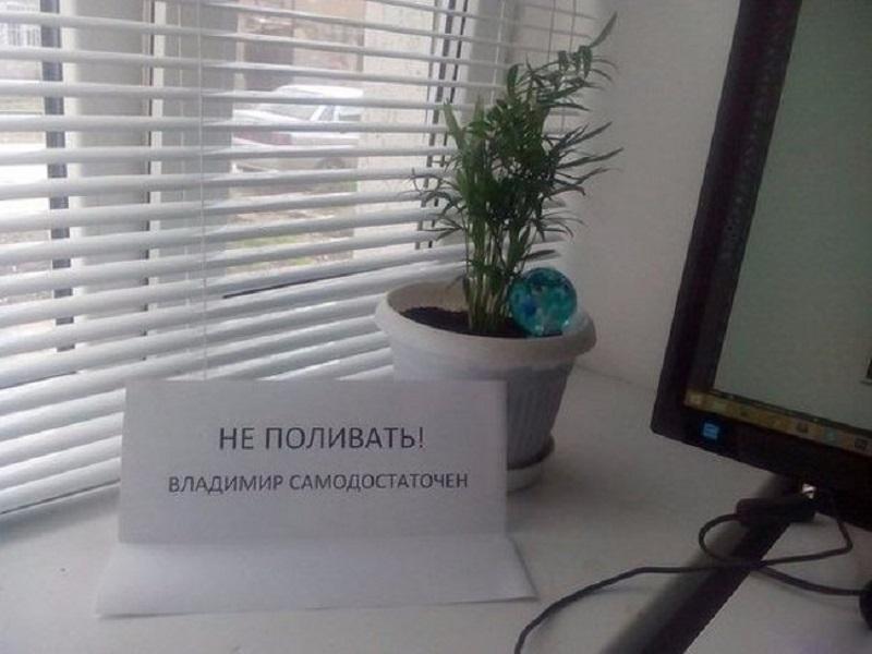 смешное объявление о растении