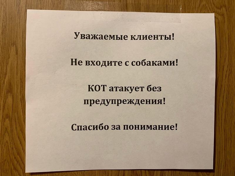 смешное объявление с котом